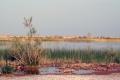 lago-bordj-el-khadra-2