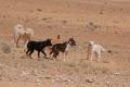381466_maya-e-cani-tunisini